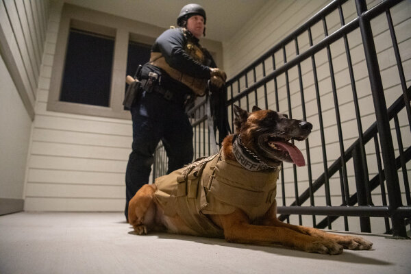 Police K9s forced on unemployment for expertise in marijuana searches