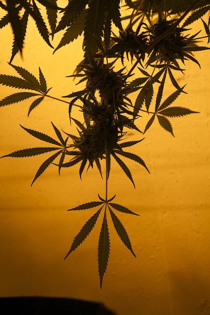 Marijuana Sales are High in Colorado